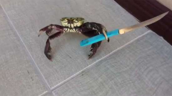 Crab With Knife