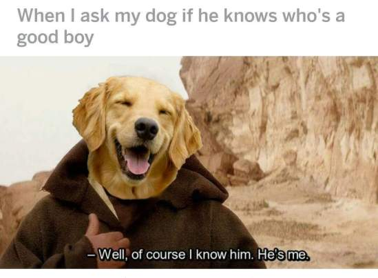 When I Ask My Dog If He Knows He's A Good Boy